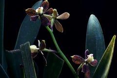 Различное расположение цветков орхидеи стоковое фото rf