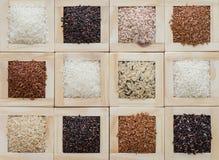 Различное собрание риса для предпосылки Стоковые Фотографии RF