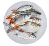 Различное lind сырых рыб на тарелке Стоковые Фотографии RF