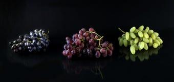 Различные виноградины Стоковые Изображения