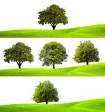 Собрание зеленых деревьев Стоковая Фотография