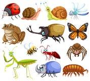 Различные виды черепашок бесплатная иллюстрация