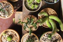 Различные заводы кактуса, взгляд сверху Стоковое Изображение RF