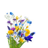 Различные изолированные полевые цветки Стоковое Изображение