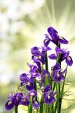 Различные красивые цветки в саде Стоковые Изображения RF