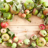 Различные органические яблоки стоковые изображения rf