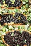 Различные разнообразия виноградин в плетеных корзинах, вертикального co Стоковое Фото