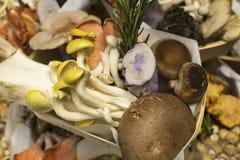 Различные разнообразия гриба Стоковые Изображения RF