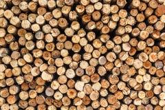 Различные разделы дерева Стоковые Фото