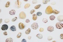 Различные раковины изолированные на белизне Стоковые Изображения