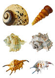 Различные раковины моря на белой предпосылке стоковые изображения