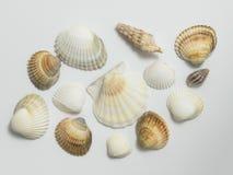 Различные раковины на белой предпосылке Стоковое фото RF