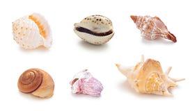 Различные раковины раковины моря в ряд Стоковые Изображения