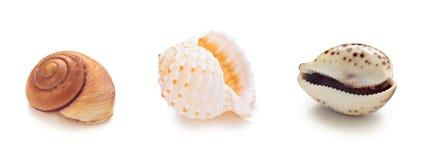 Различные раковины раковины моря в ряд Стоковое фото RF