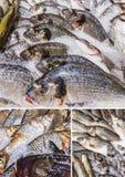 Различные рыбы, который хранят на льде Стоковые Изображения RF