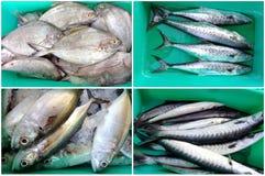 Различные рыбы Стоковая Фотография