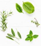 Различные свежие травы от пипермента сада, сладостного базилика, ro Стоковое Фото
