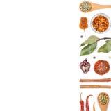 Различные специи и травы на белой предпосылке Взгляд сверху Стоковая Фотография