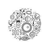 Различные типы клетки человека Стоковые Изображения