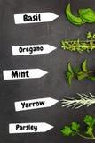 Различные типы трав стоковая фотография rf