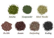различные типы чая Стоковое Изображение RF