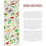 Различные травы и специи с текстом описания Стоковое Изображение