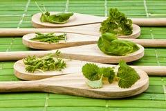 Различные травы на деревянных ложках Стоковая Фотография RF