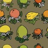 Различные тропические цитрусовые фрукты Стоковое Изображение