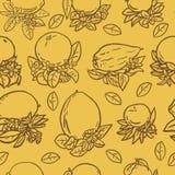 Различные тропические цитрусовые фрукты Стоковое Фото