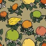 Различные тропические цитрусовые фрукты Стоковые Изображения RF
