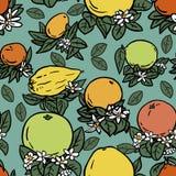 Различные тропические цитрусовые фрукты Бесплатная Иллюстрация