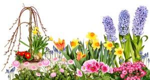 Различные цветки весны стоковое изображение rf