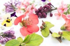 Различные цветки весны Стоковое Фото