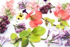 Различные цветки весны Стоковая Фотография RF