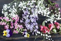 Различные цветки весны Стоковые Изображения RF