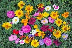 Различные цветки на траве Стоковое Фото