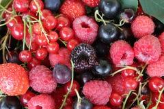 Различные ягоды как предпосылка стоковое фото