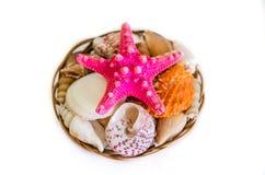 различные seashells и scallops Стоковые Фото