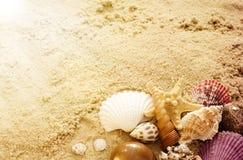 Различные seashells на песке волейбол лета пляжа шарика предпосылки красивейший пустой Концепция плаката каникул Стоковое Изображение RF