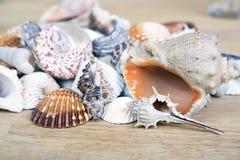 Различные seashells сложенные совместно как предпосылка Стоковые Фото