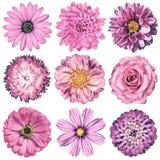 Различный винтажный ретро выбор цветков изолированный на белизне Стоковая Фотография RF