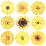 Различный винтажный ретро выбор цветков изолированный на белизне Стоковое Изображение