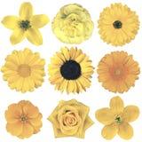 Различный винтажный ретро выбор цветков изолированный на белизне Стоковое Изображение RF
