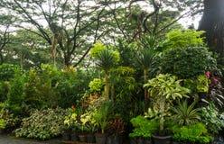 Различный вид завода и цветка аранжировал как маленькие джунгли и надувательство фото флориста принятым в Джакарту Индонезию Стоковые Фото