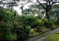 Различный вид завода и цветка аранжировал как маленькие джунгли и надувательство фото флориста принятым в Джакарту Индонезию Стоковое Фото