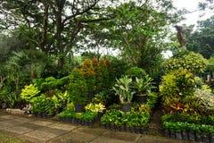 Различный вид завода и цветка аранжировал как маленькие джунгли и надувательство фото флориста принятым в Джакарту Индонезию Стоковая Фотография