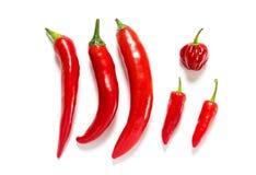 Различный вид ofred перец горячего chili изолированный на белой предпосылке Стоковое Фото