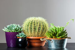 Различный кактус 4 стоковое изображение