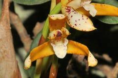 Различный конец вверх цветка орхидеи стоковая фотография rf