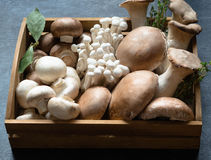 Различный сырцовый гриб печатает внутри деревянный поднос Стоковая Фотография
